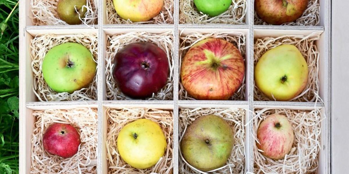 Von Broadoarsch bis Schafnase: Wie man Apfelsorten retten kann