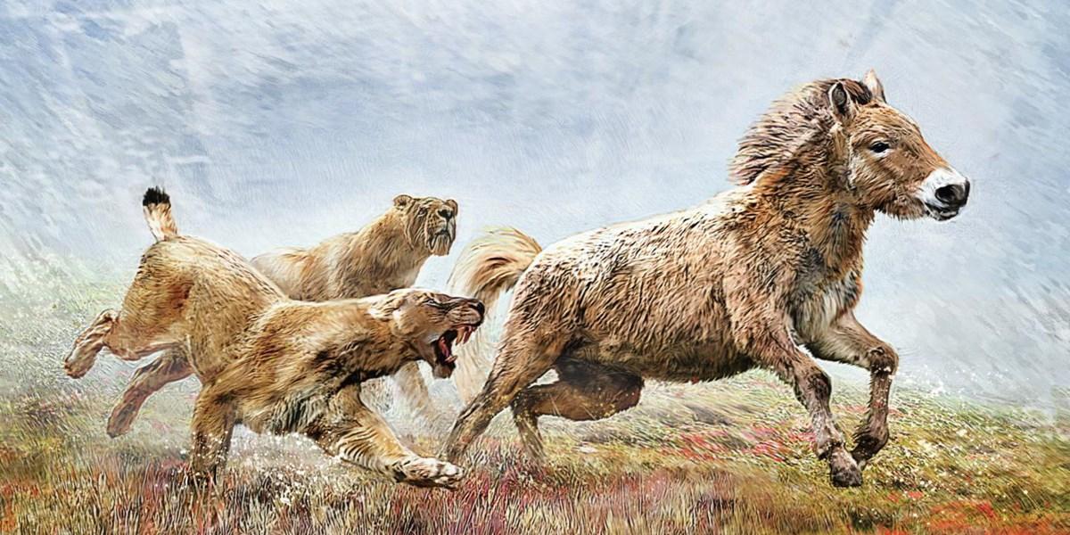 Der Wolf unter den Säbelzahnkatzen