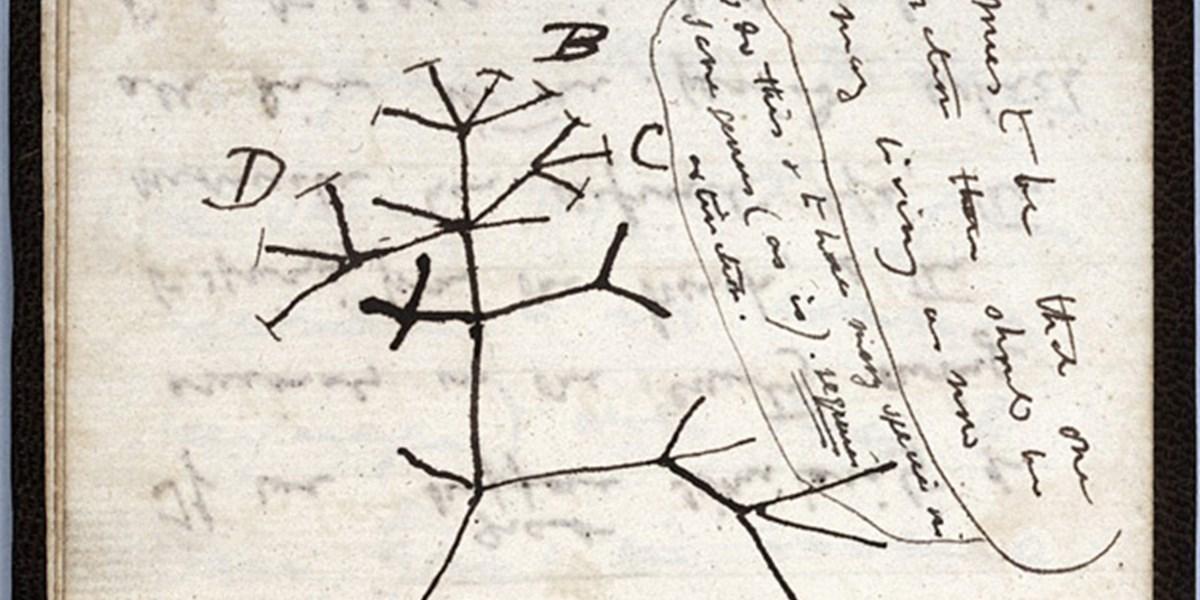 Charles Darwins Notizbücher vermutlich aus Bibliothek in Cambridge gestohlen