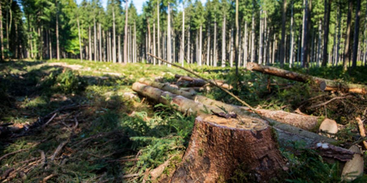 """Wie es um das """"Waldland Österreich"""" tatsächlich bestellt ist"""