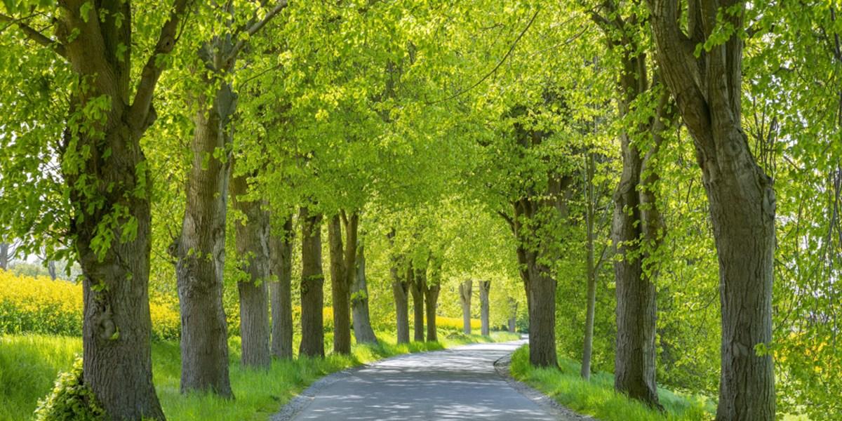 Der Baum des Jahres 2021 ist ein Duo - Natur - derStandard ...