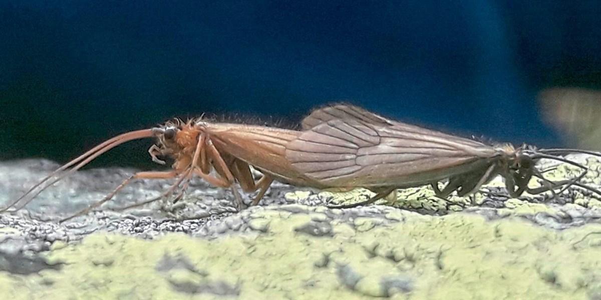 Das Coronavirus erreicht die Insektenwelt – als Namensgeber