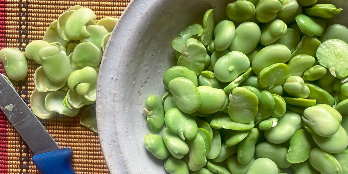 Saugute Bohnen: Was die Favabohne alles kann