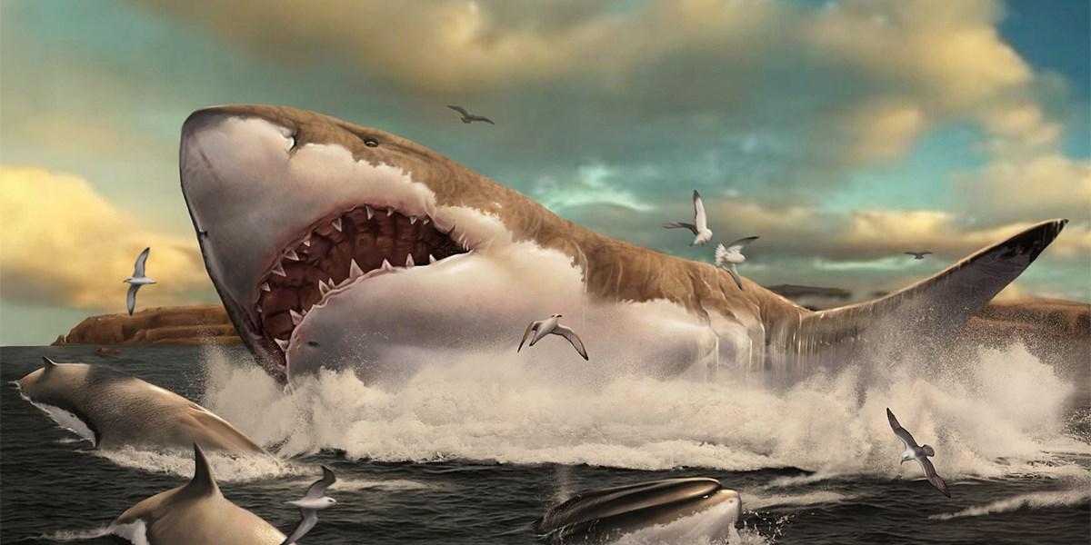 Riesenhai Megalodon war womöglich größer als gedacht