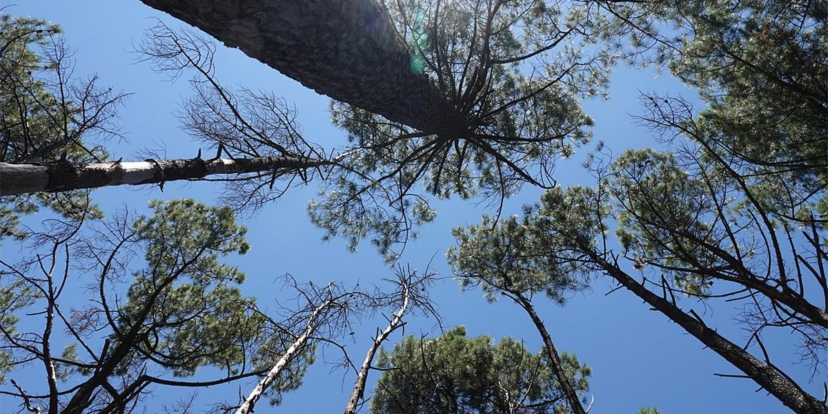 Bäume wachsen nachts und nur an wenigen Tagen pro Jahr