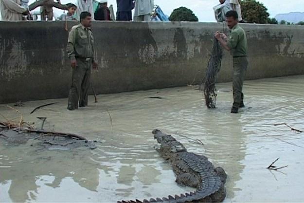 https://images.derstandard.at/t/M625/movies/2011/15947/170228213032894_28_das-persische-krokodil_aufm3.jpg