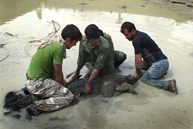 https://images.derstandard.at/t/M625/movies/2011/15947/170228213033052_28_das-persische-krokodil_aufm4.jpg