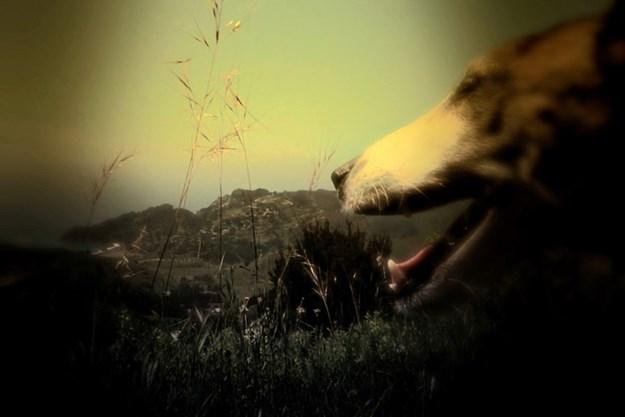 https://images.derstandard.at/t/M625/movies/2015/21981/160510223126177_9_heart-of-a-dog_aufm03.jpg