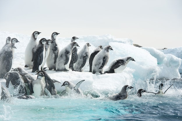 https://images.derstandard.at/t/M625/movies/2017/25987/171103223036243_15_die-reise-der-pinguine-2_aufm03.jpg