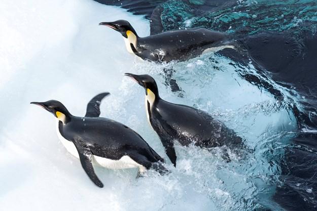 https://images.derstandard.at/t/M625/movies/2017/25987/171103223036950_12_die-reise-der-pinguine-2_aufm02.jpg