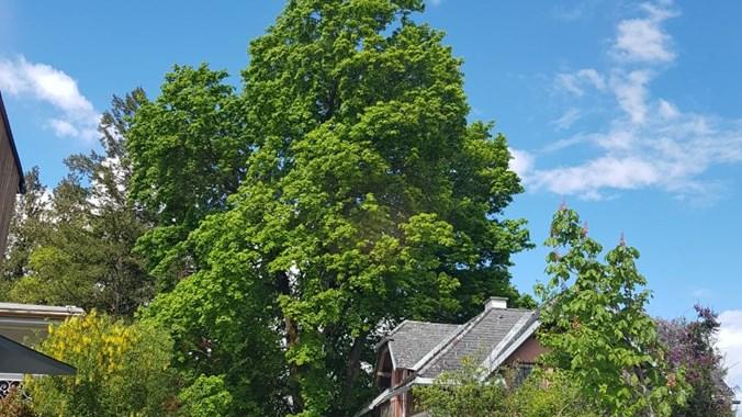 Blick auf das Haus (rechts, vor dem großen Baum) von der Straße aus.